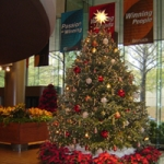 Poinsettias encircling a 12 foot tall decorated tree
