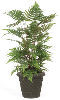 4 foot Forest Fern