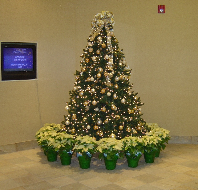 christmas tree wrapped with blonde poinsettias - Christmas Tree Decorating Service