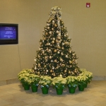 Christmas Tree Wrapped with Blonde Poinsettias